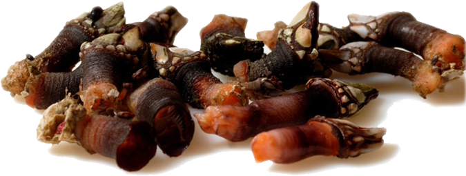 percebes_cocidos.png